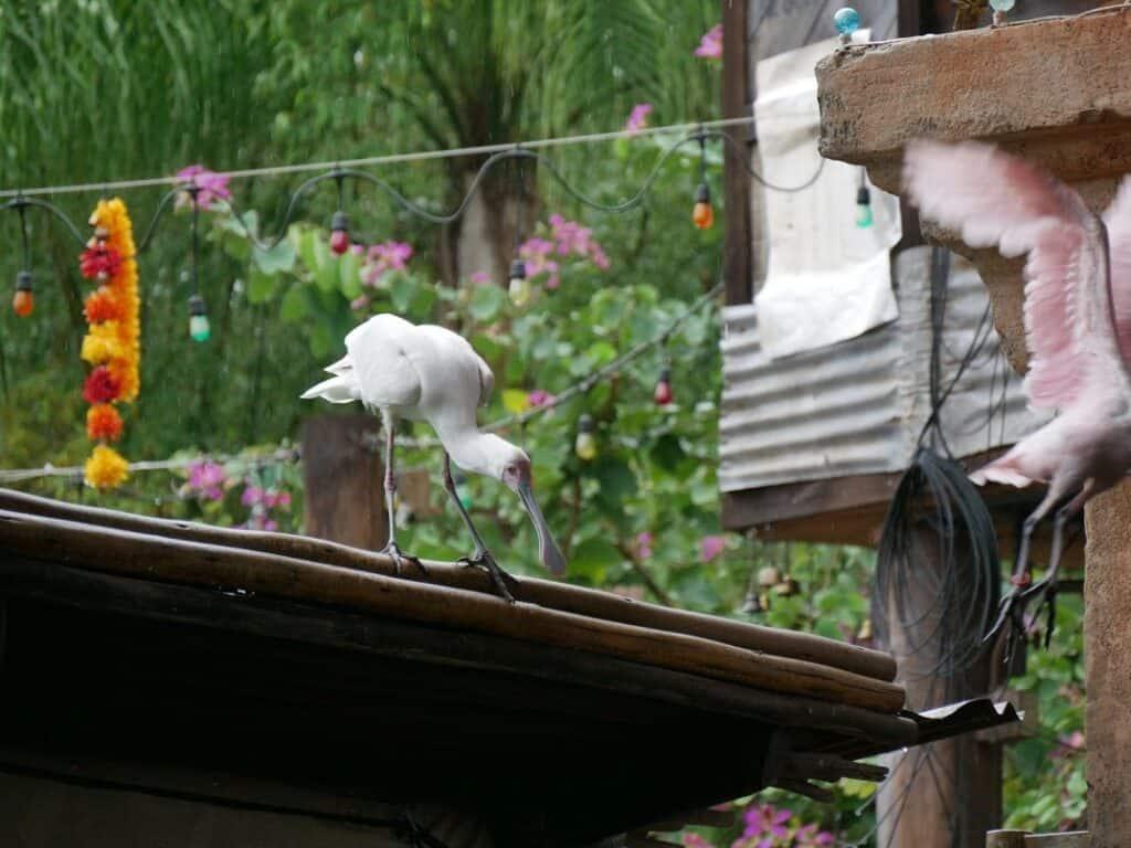 Birds flying at Animal Kingdom in Orlando Florida